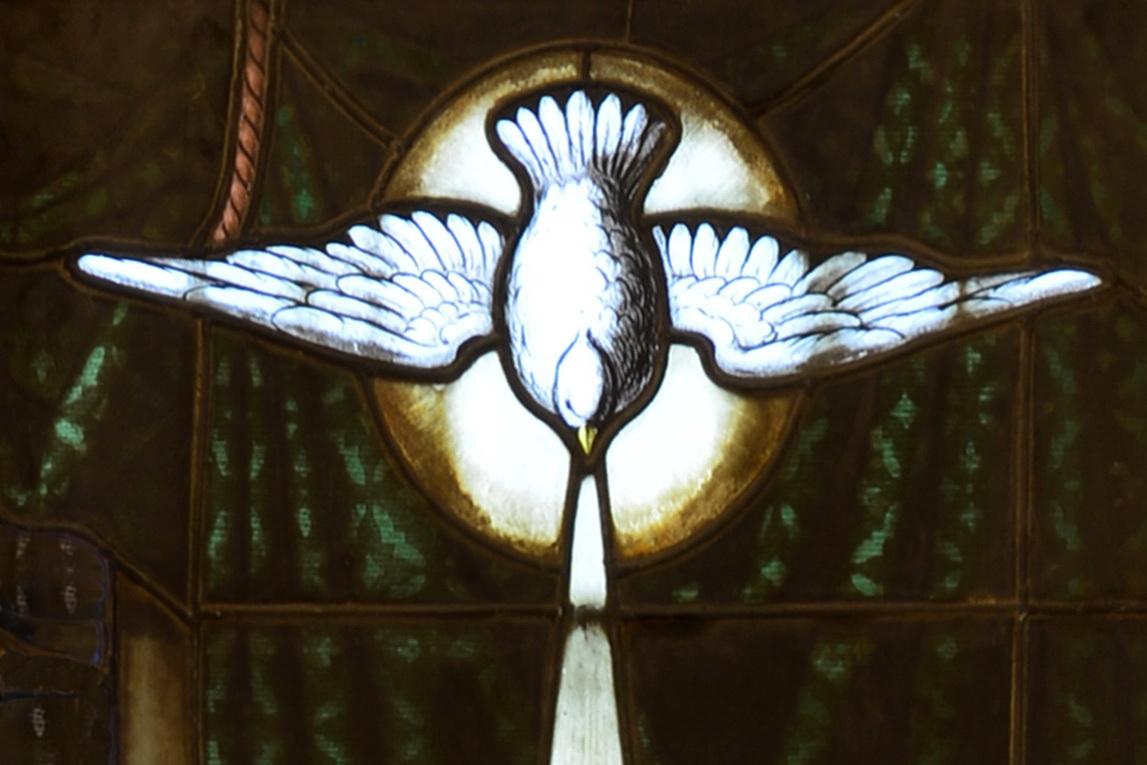 """Heilig-Geist-Taube – Detail im Kirchenfenster der Pfarrkirche """"St. Marien"""" in Zittau"""